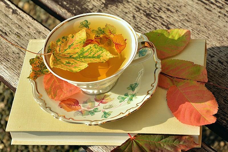 Chás são uma boa pedida para melhorar o sistema imunológico no outono