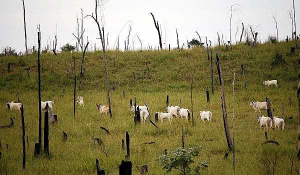 Áreas de vegetação florestal são constantemente desmatadas para formação de pastos