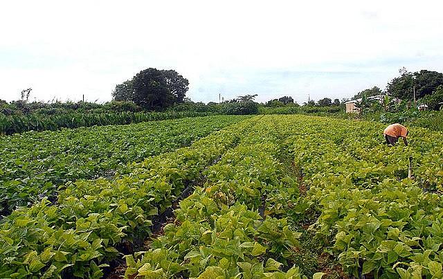 Gran parte de la mano de obra pagada en el campo está en las propiedades de hasta 50 hectáreas