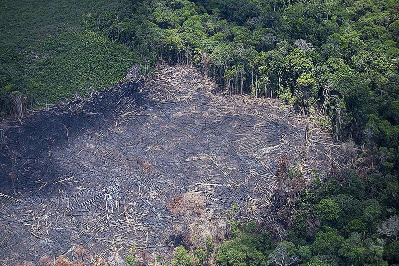 Entre 2017 e 2018, desmatamento da Amazônia Legal cresceu 13,7%