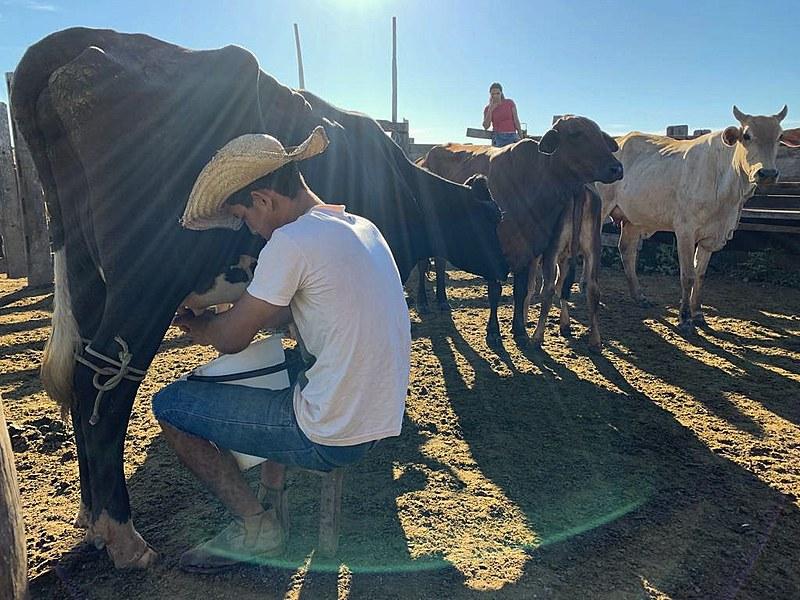 Famílias trabalham na terra e produzem mensalmente 184 mil litros de leite, além de 174 toneladas de farinha