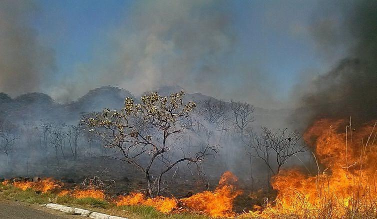 Os incêndios em áreas florestais e de lavoura já são 216 mil em todo o país